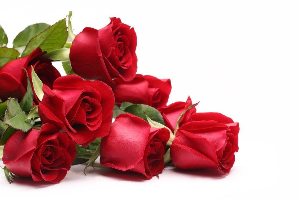 Znalezione obrazy dla zapytania: róże